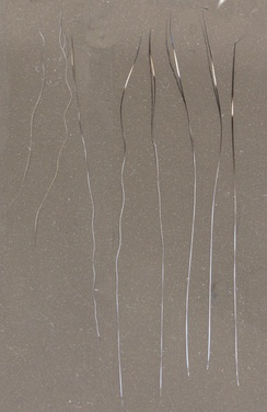 Down, awn and guard hairs of a domestic tabby cat