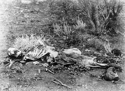 Forensic anthropologists can help identify skeletonized human remains, such as these found lying in scrub in Western Australia, c. 1900–1910.