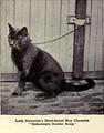 CHAMPION BALLOCHMYLE BROTHER BUMP, 1902 г.