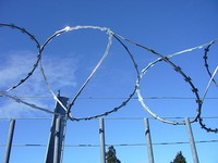 Medium barb razor wire