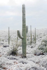 During wintertime, snow may fall in Tucson on rare occasions.