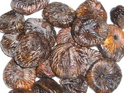 Dried figs were a significant source of winter food