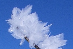 Feather ice on the plateau near Alta, Norway. The crystals form at temperatures below −30 °C (−22 °F).