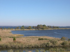 Tidal wetlands of the Chesapeake Bay in Maryland
