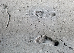 "2,100-year-old human footprints called ""Huellas de Acahualinca"" preserved in volcanic mud near Lake Managua."