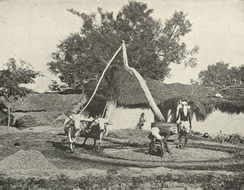 Old-fashioned Indian Sugarcane Press, c. 1905