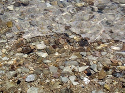 Pebbles cemented with halite on the western shore of the Dead Sea near Ein Gedi.