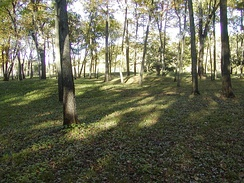 Woodland conical mounds at Effigy Mounds National Monument, Sny Magill Unit, Clayton County, Iowa