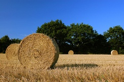 Straw of hay in a field of Schleswig-Holstein, Germany.