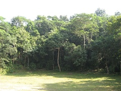 Lawachara National Park, a subtropical rainforest in Sylhet Division