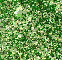 Circular irrigated crop fields in Kansas. Healthy, growing crops of corn and sorghum are green (sorghum may be slightly paler). Wheat is brilliant gold. Fields of brown have been recently harvested and plowed or have lain in fallow for the year.