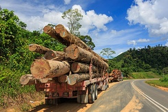 A lorry carrying timbers in Tawau, logging have contributed for over 50% of the state revenue.[212]
