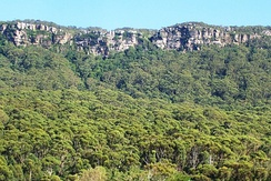 Illawarra Escarpment above Austinmer, showing Hawkesbury sandstone, Rainforest and Eucalyptus forest.