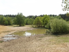 Horsell Common sandpit, site of the landing of the Martians in H.G. Wells' The War of the Worlds.