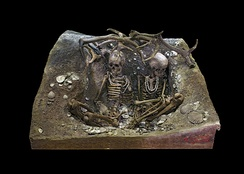 Two skeletons in the Tomb of Téviec