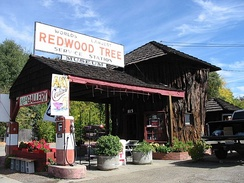 "The ""World's Largest Redwood Tree Service Station"" in Ukiah is built largely from a massive section of Sequoia."