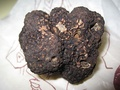 Трюфель чёрныйTuber melanosporum
