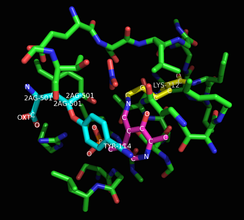 Inhibited cystathionase active site.[2] The inhibitor and Tyr114 are in light blue, PLP in purple, and Lys121 in yellow.