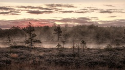 Fog rising over the Mukri bog near Mukri, Estonia. The bog has an area of 2,147 hectares (5,310 acres) and has been protected since 1992.