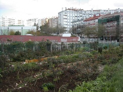 Allotments on the outskirts of Lisbon.