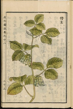 Soybean, illustration from the Japanese agricultural encyclopedia Seikei Zusetsu (1804)