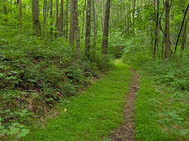 Hardwood forest in Middle Tennessee