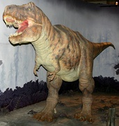 Tyrannosaurus, a large theropod dinosaur of the Cretaceous, reconstruction