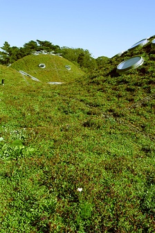 A modern green roof at California Academy of Sciences, constructed for low maintenance by omitting many native plant species in favor of the hardiest varieties[8]