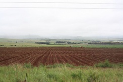 Workers planting on a farm in the central area of Mpumalanga