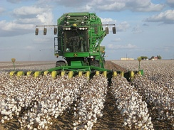 A John Deere cotton harvester at work in a cotton field.