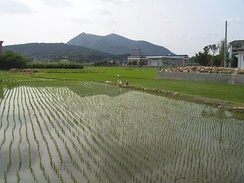 Paddy field near Namwon, South Korea, early June
