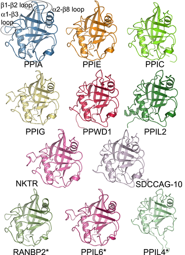 Members of a protein family, as represented by the structures of the isomerase domains