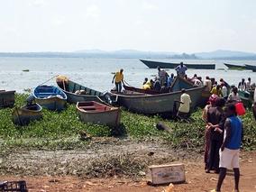 Озеро Виктория в Уганде.