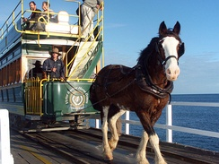 Horse-drawn tram on causeway at Victor Harbor