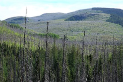 Forest in Grands-Jardins National Park 10 years after a forest fire occurred. [28]