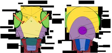 Схема строения головы насекомых