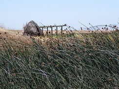A reconstructed Patwin reed hut at Rush Ranch Open Space, Solano County