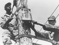 These student repairmen install a terminal box atop a telephone pole. This is an example of the practical training received in the ATC installer repairman phase of the fixed wire communications course at Francis E. Warren AFB