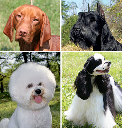 Dogs display a wide variation on coat type, density, length, color, and composition