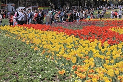 Floriade is held in Commonwealth Park every spring. It is the largest flower festival in the Southern Hemisphere, employing and encouraging environmental practises, including the use of green energy.[173]