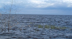 Lake Okeechobee, from Canal Point, Florida