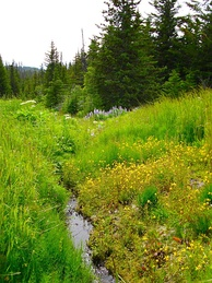 Small tributary stream, Diamond Ridge, Alaska, US