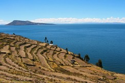 Inca-era terraces on Taquile are used to grow traditional Andean staples such as quinoa and potatoes, alongside wheat, a European introduction.