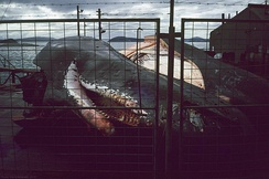 Sperm whale remains at the Albany Whaling Station in July 1977