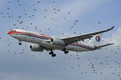 An Airbus A330 of China Eastern behind a flock of birds at London Heathrow