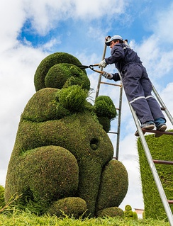 A gardener maintaining topiary in Tulcán, Ecuador