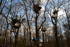 Tree houses for protesting the felling of part of Hambach Forest for the Hambach surface mine in Germany: after which the felling was suspended in 2018