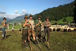 Herding sheep in Austria