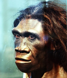 Forensic reconstruction of an adult female Homo erectus.[3]