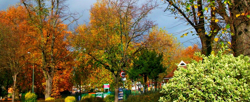 Autumnal trees on Sutton Green